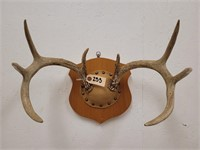 4/24/2021 Taxidermy Auction