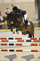 2021 Westfalen Second Chance Stallion Service Auction