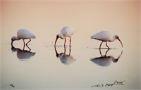 1995 Thomas Mangelsen Photograph GIFT OF THE TIDES