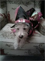 Doggy witch costume. Pink/black complete with hat