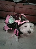 Doggy witch costume. Pink/black no hat