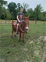 April 17th Catalog Horse & Tack Sale
