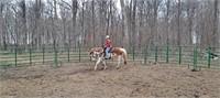 West Central Livestock LLC
