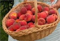 Feelin' Peachy!