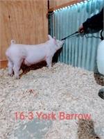 16-3 York Barrow, Born: 02-07-21, Sire: Space Jam