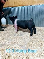 12-3 Hamp Boar, Born: 02-02-21, Sire: Set the Bar