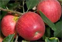 Sierra Gold Nurseries End-Of-Season Surplus Auction