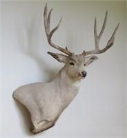 Furniture-Artwork-Decor-Camo clothing PICK-UP IN BARNEVELD