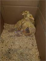 Alternative Animal & Exhibition Stock Online Auction 5-7-21