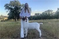2021 Silver Dollar Fair Jr Livestock Auction