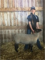 Fort Macleod 4-H Beef Club Auction