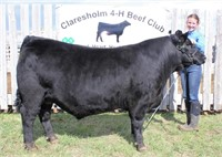 Claresholm 4-H Beef Club Auction