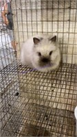 Small Animal & Exhibition Online Auction 6-11-21