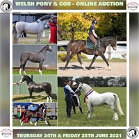 AWC SPECIAL EVENT: WPCSA WELSH PONY & COB - ONLINE AUCTION