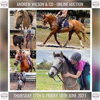 ANDREW WILSON & CO: ONLINE AUCTIONS - HORSE & SADDLERY (AUS)