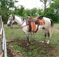 Valhalla Ranch, Ranch Horse Sale