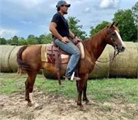 June 19th, 2021 Catalog Horse & Tack Sale