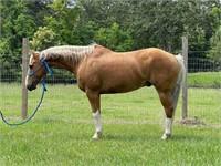North Mississippi Stockyard June 24th Horse Sale